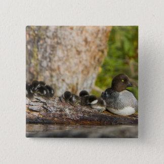 Canada, British Columbia,Common Goldeneye, 15 Cm Square Badge