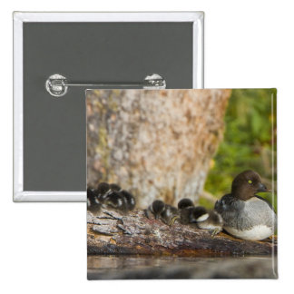 Canada, British Columbia,Common Goldeneye, 15 Cm Square Badge