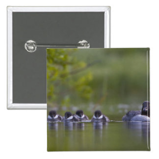 Canada, British Columbia,Common Goldeneye, 2 15 Cm Square Badge