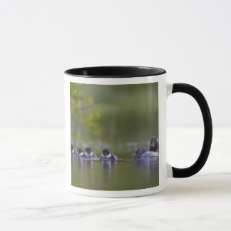 Canada, British Columbia,Common Goldeneye, 2 Mug
