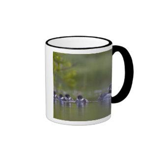 Canada, British Columbia,Common Goldeneye, 2 Ringer Mug
