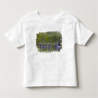 Canada, British Columbia,Common Goldeneye, 2 Toddler T-Shirt