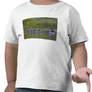 Canada, British Columbia,Common Goldeneye, 2 T-shirts