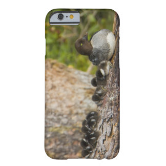 Canada, British Columbia,Common Goldeneye, Barely There iPhone 6 Case