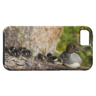 Canada, British Columbia,Common Goldeneye, Case For The iPhone 5