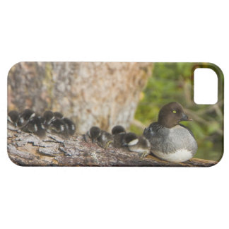 Canada, British Columbia,Common Goldeneye, iPhone 5 Cases