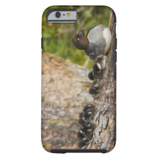 Canada, British Columbia,Common Goldeneye, Tough iPhone 6 Case