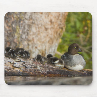 Canada, British Columbia,Common Goldeneye, Mouse Pad