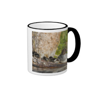 Canada, British Columbia,Common Goldeneye, Ringer Mug