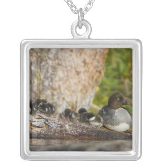 Canada, British Columbia,Common Goldeneye, Silver Plated Necklace