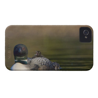 Canada, British Columbia,Common Loon, breeding 2 iPhone 4 Cover