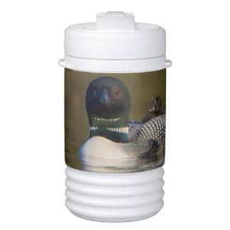 Canada, British Columbia,Common Loon, breeding 2 Cooler
