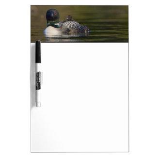 Canada, British Columbia,Common Loon, breeding 2 Dry Erase White Board