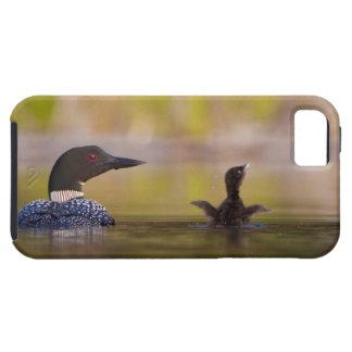 Canada, British Columbia,Common Loon, breeding 3 iPhone 5 Cases