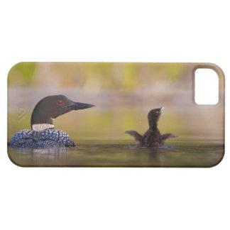 Canada, British Columbia,Common Loon, breeding 3 iPhone 5 Cover