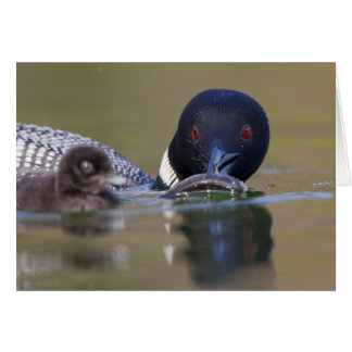 Canada, British Columbia,Common Loon, breeding Greeting Card