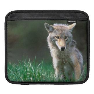 Canada, British Columbia, Coyote (Canis latrans) iPad Sleeve