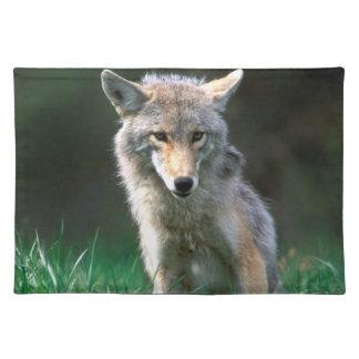 Canada, British Columbia, Coyote (Canis latrans) Placemat