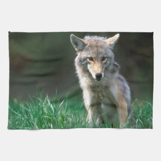 Canada, British Columbia, Coyote (Canis latrans) Tea Towel