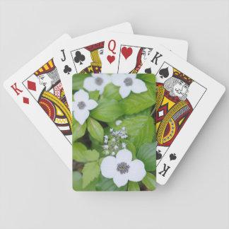 Canada, British Columbia. Dwarf Dogwood Playing Cards