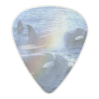 Canada, British Columbia, Johnstone Straight, Acetal Guitar Pick