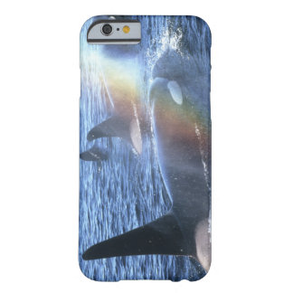 Canada, British Columbia, Johnstone Straight, Barely There iPhone 6 Case
