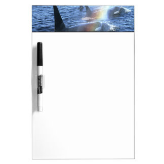 Canada, British Columbia, Johnstone Straight, Dry Erase Board