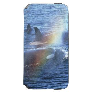 Canada, British Columbia, Johnstone Straight, Incipio Watson™ iPhone 6 Wallet Case