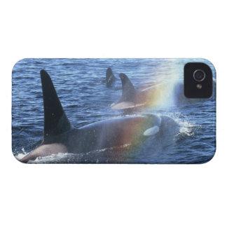 Canada, British Columbia, Johnstone Straight, iPhone 4 Cases