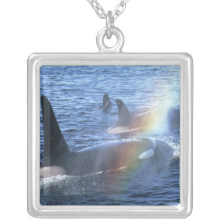 Canada, British Columbia, Johnstone Straight, Silver Plated Necklace