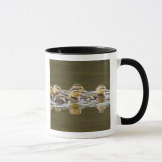 Canada, British Columbia, Kamloops, mallard 2 Mug