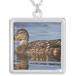 Canada, British Columbia, Kamloops, mallard Silver Plated Necklace