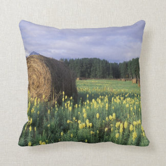 Canada, British Columbia, Kitwanga. Yellow Cushion
