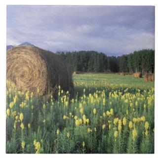 Canada, British Columbia, Kitwanga. Yellow Large Square Tile