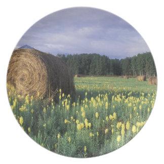 Canada, British Columbia, Kitwanga. Yellow Plate