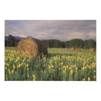 Canada, British Columbia, Kitwanga. Yellow Wood Print