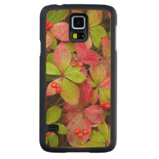 Canada, British Columbia, Mount Robson Carved Maple Galaxy S5 Case