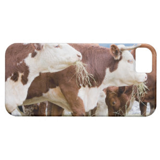 Canada, British Columbia, Pemberton Case For The iPhone 5