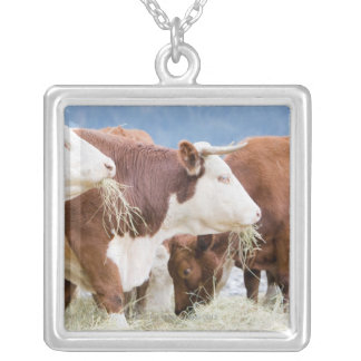 Canada, British Columbia, Pemberton Silver Plated Necklace