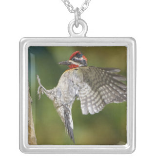 Canada, British Columbia,Red-naped Sapsucker, Silver Plated Necklace
