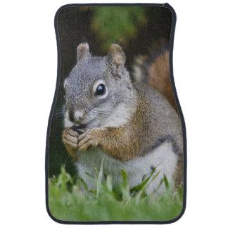 Canada, British Columbia, Red Squirrel Pine Car Mat