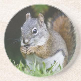 Canada, British Columbia, Red Squirrel Pine Coaster
