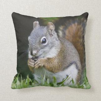 Canada, British Columbia, Red Squirrel Pine Cushion