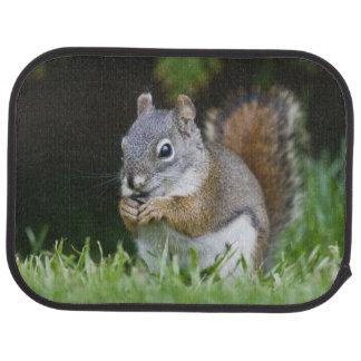 Canada, British Columbia, Red Squirrel Pine Floor Mat