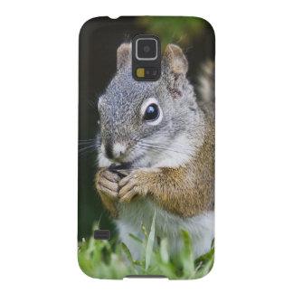 Canada, British Columbia, Red Squirrel Pine Galaxy S5 Cover