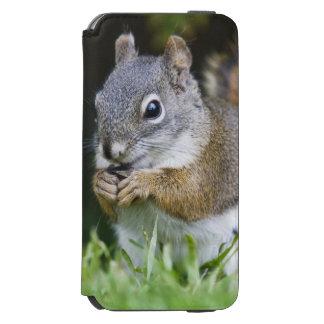 Canada, British Columbia, Red Squirrel Pine Incipio Watson™ iPhone 6 Wallet Case