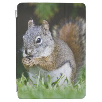 Canada, British Columbia, Red Squirrel Pine iPad Air Cover