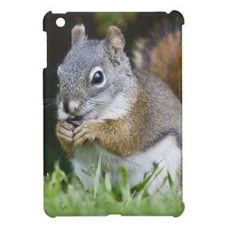 Canada, British Columbia, Red Squirrel Pine iPad Mini Cases