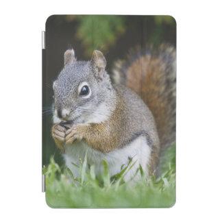Canada, British Columbia, Red Squirrel Pine iPad Mini Cover