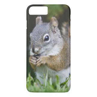 Canada, British Columbia, Red Squirrel Pine iPhone 8 Plus/7 Plus Case